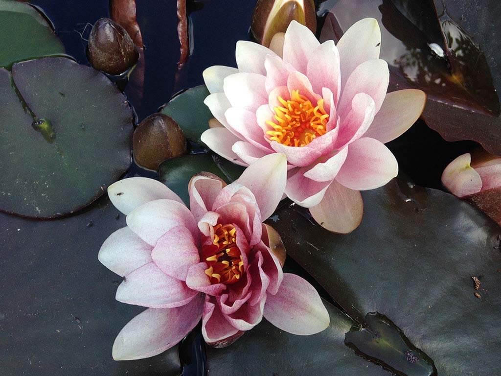 Bone Marrow Breathing Guided Meditation - Swara Yoga Academy
